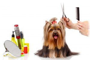 groom-your-dog-at-home-and-save-on-professional-dog-grooming-services-image-fb